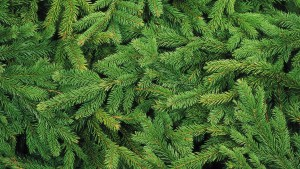 christmas-tree-1954838_1920